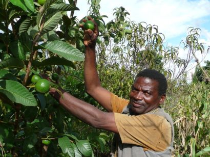 smallholder farmers as the central focus