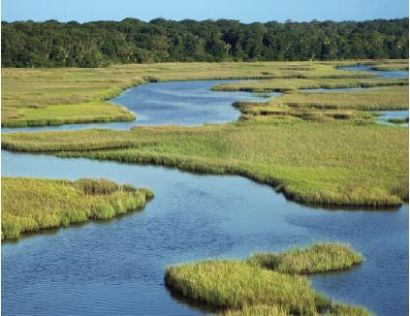 tidal marshes are crucial to water-systems are can be essential barriers in times of flooding and storm-surge