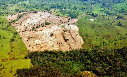 the failing of brazil's forest code?