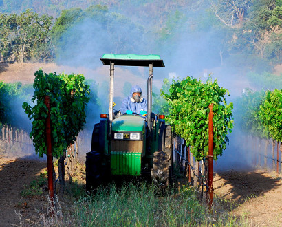 Spraying vineyards