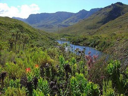 fynbos to disappear?