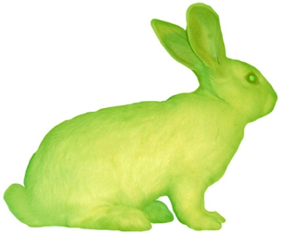 Alba, transgenic glowing bunny with jelly fish genes: Died age 4 instead of 12.