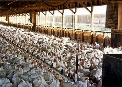 factory-farming inefficiently consumes natural resources
