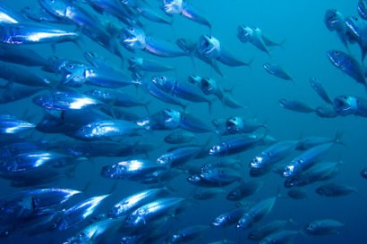 Could it be we are pushing fish to extinction?